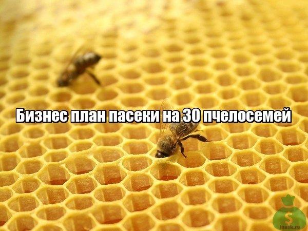 Бизнес план пасеки на 30 пчелосемей