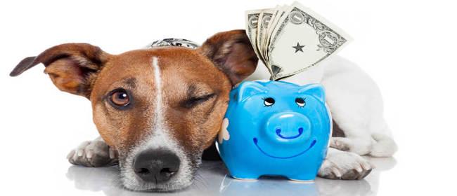 8 способов выгодно (и не очень) вложить доллары